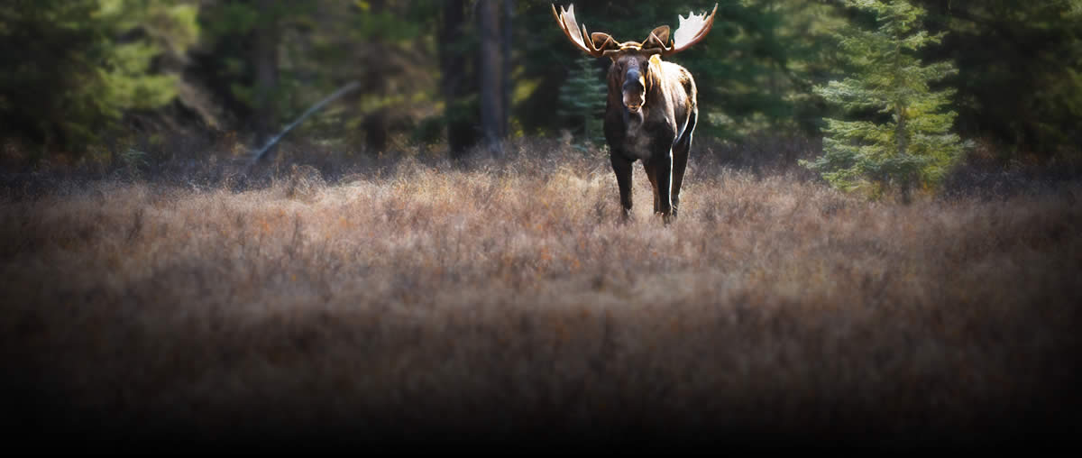 welcome to new hampshire fish and game department's online license